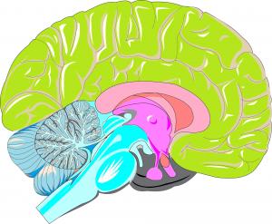 cerebro-comportamiento-trisquel